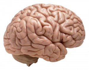 Is Your Son's Brain Starving - Solving Behavior Issues with Nutrition