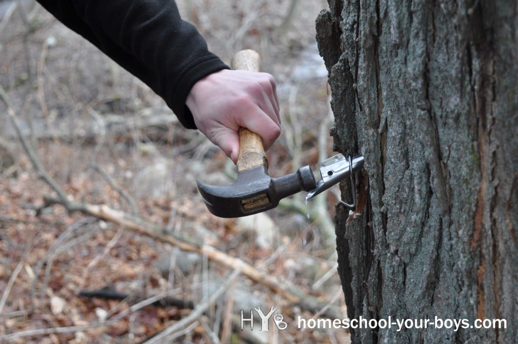 taptrees-hammer
