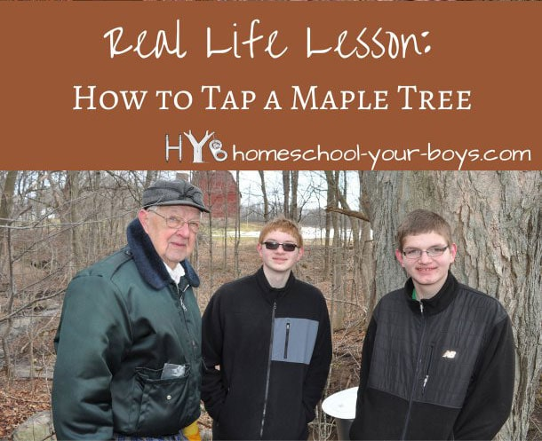Real Life Lesson: How to Tap a Maple Tree